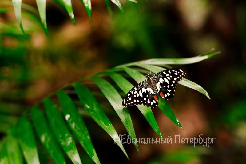 Романтическое свидание в саду бабочек
